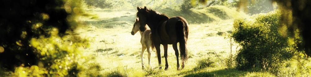 [Translate to Italienisch:] Diagnostic Animals - Furanalysis or Hairanalysis - Equine Horse